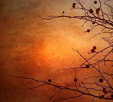 Orange Simplicity by Tara  Turner