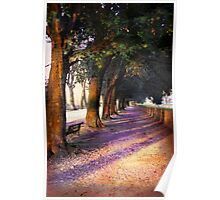 Shadows & Tall Trees Poster