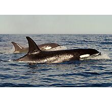Orca pair Photographic Print