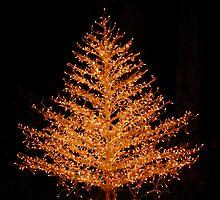 Merry Xmas by William Sanford