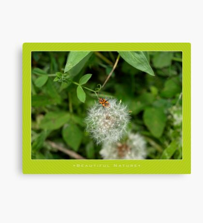 Macro: Beautiful  Nature - 10 Canvas Print