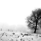 Winter Solitude by Kasia-D