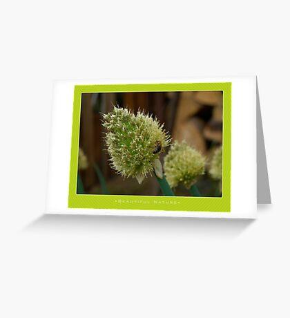 Macro: Beautiful  Nature - 12 Greeting Card