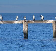 All in a row by Mark Maloney