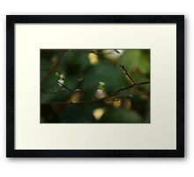 Whispers of Spring in the Tranquil Forest Framed Print