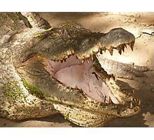 KACHIKALLY CROCODILE POOL . Photographic Print