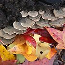 leaves and mushrooms by ANNABEL   S. ALENTON