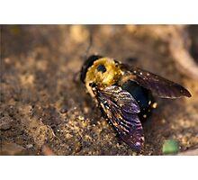 Vibrant Wings Photographic Print
