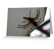 Huntsman spider with prey Greeting Card