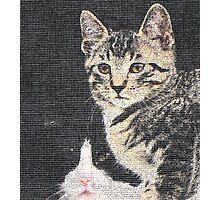 Window Cats Photographic Print
