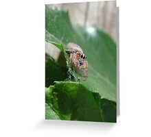 Jumping Spider #1 Greeting Card