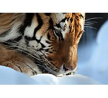 Crouched in the Snow Photographic Print