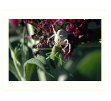 Crab Spider with katydid prey Art Print