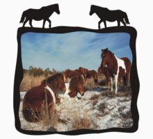 WILD HORSE T-SHIRT by Sandy O'Toole