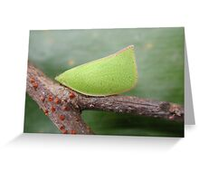 Leafhopper insect Greeting Card