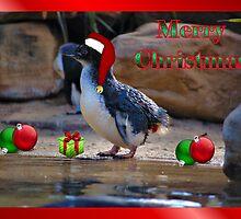 MERRY CHRISTMAS - FAIRY PENGUIN by Cheryl Hall