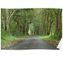 Australian Country Lane - Tenterfield NSW Poster