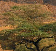 a wonderful Sudan landscape Sticker