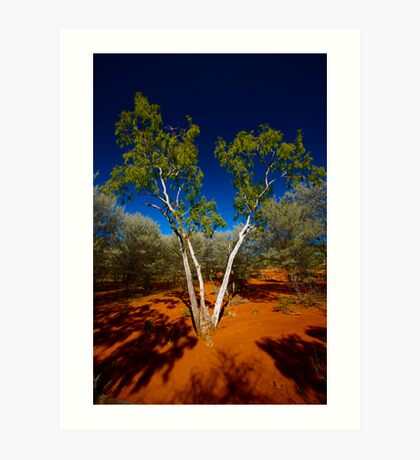 Ghost Gum Surrounded by Mulga Art Print