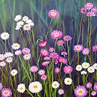 Wildflowers of Western Australia - Paper Daisies - Acrylic on canvas by Adriel Knowling