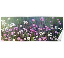 Wildflowers of Western Australia - Paper Daisies - Acrylic on canvas Poster