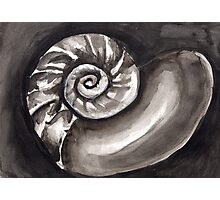 Black and White Seashell Photographic Print