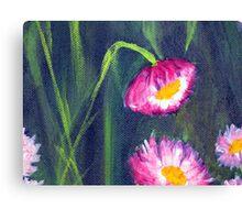 Paper Daisies - Acrylic on canvas - closeup01 Canvas Print