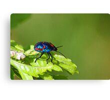 Got the Colour Bug Canvas Print