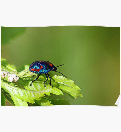 Got the Colour Bug Poster