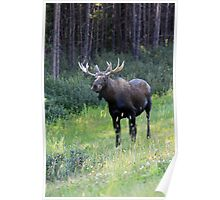 Canadian Moose Poster