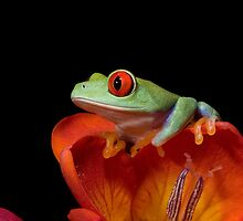 Perched by Angi Wallace