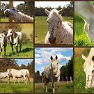 Horses by Rosemaree
