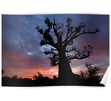 Baobab Tree at Sunrise Poster