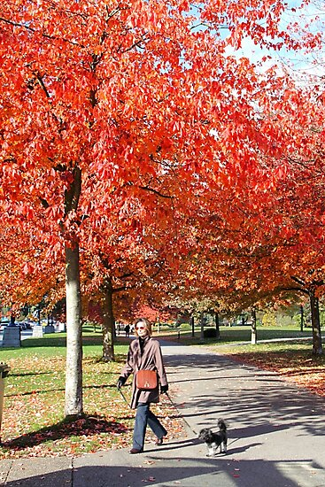 Walking the Dog in a Park, Vancouver City, Canada  by Carole-Anne