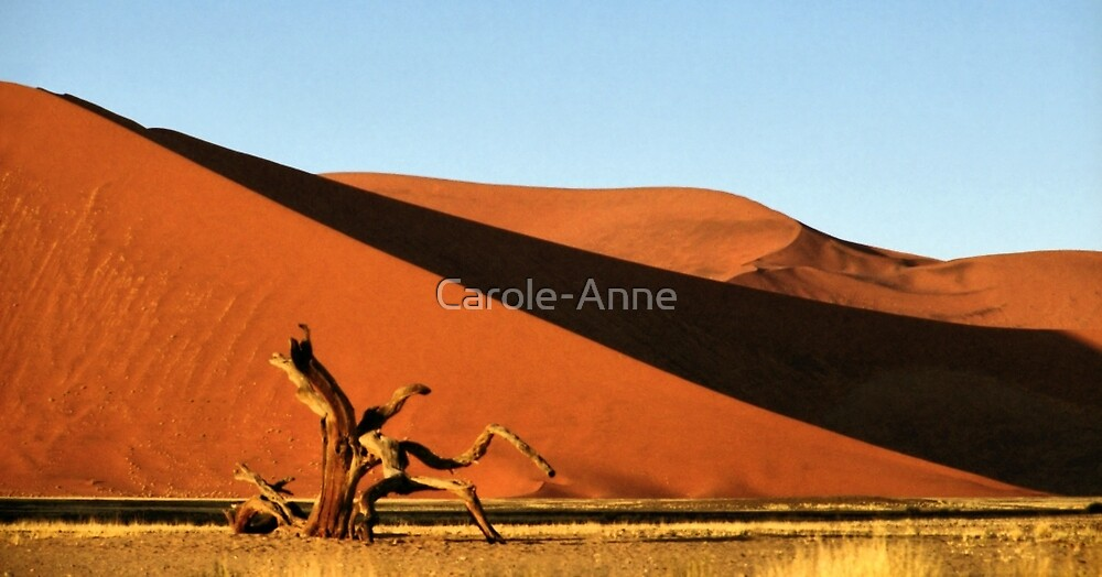 Dunes, Dead Tree & Dry Tsauchab River Valley, Namibia  by Carole-Anne