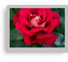 Beautiful  Nature: Roses - 2 Canvas Print