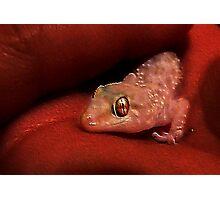 Baby Gecko Photographic Print