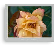 Beautiful  Nature: Roses - 5 Canvas Print