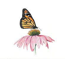 Monarch by timoteo