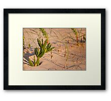 Succulent in the sand Framed Print