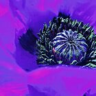 Blue Mohn 2 by Greta Schnall