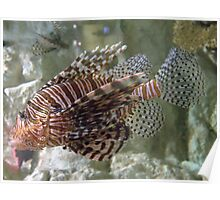 Real Fancy ~ Scorpion Fish Poster
