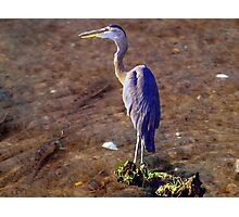 Minnow Hunt Photographic Print