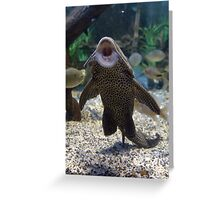 Give Me A Kiss ~ Plecostomus, or Algae eaters Greeting Card