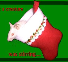 Not A Creature Was Stirring.... by Muninn