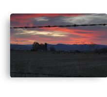 Cows - Sunset Canvas Print