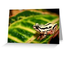 Reed frog Greeting Card