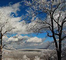 Snowy Sunday by Lois  Bryan