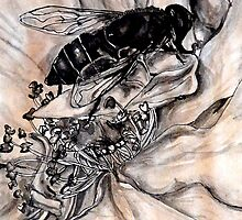 Wasp resting by Jessica Lister