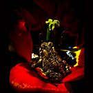 Red Photography Nature Animals Flower Toad Amphibian Tulip King by LongbowX